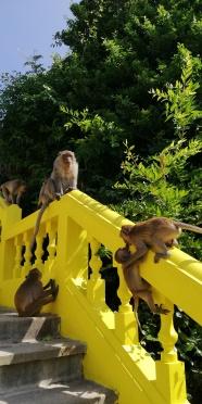 Fighting monkeys everywhere