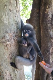 little monkey baby ♥
