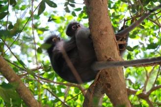 Monkey familiy